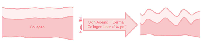 Why Collagen is Important?